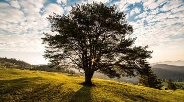 Árbol. Foto: El Norte Hoy